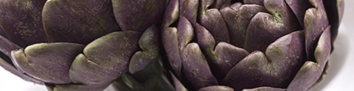 SOSTENERE L'AGROBIODIVERSITÀ ORTICOLA PUGLIESE: LE VARIETÀ DI CARCIOFO RISANATE DA VIRUS E FUNGHI