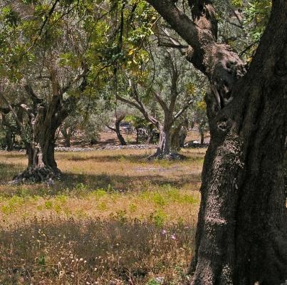 Attività di vigilanza nei consorzi pugliesi della filiera olio e vino