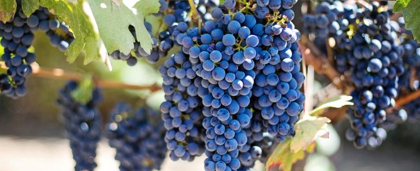 Aperte le iscrizioni all'Executive Master in Agrifood e Wine Management