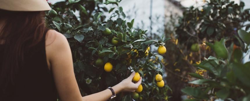 Premio De@Terra – Avviso pubblico per la valorizzazione dell'imprenditoria femminile in agricoltura